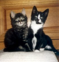 Wolfgang and Ludwig (cute kittens)